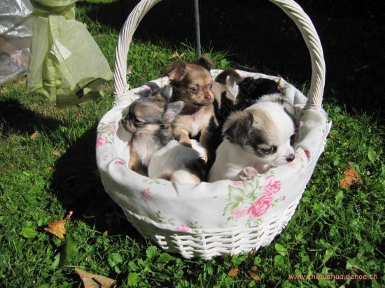 Les chiots dans le jardin